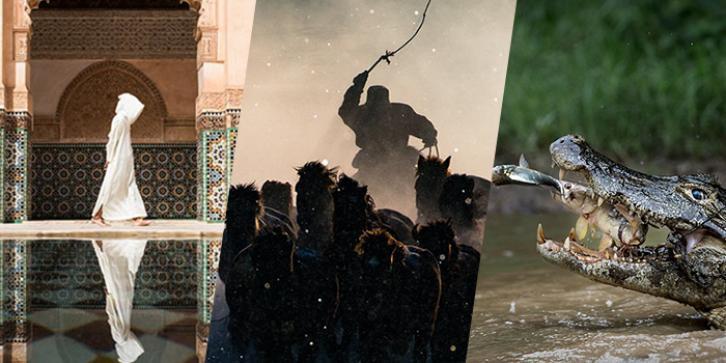 Vencedores do concurso de fotografia do National Geographic 2016